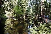 Capilano Park in North Vancouver, British Columbia, Canada