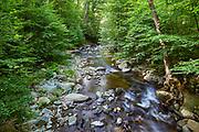 Flowing water along a creek in Lower Whiteoak Canyon