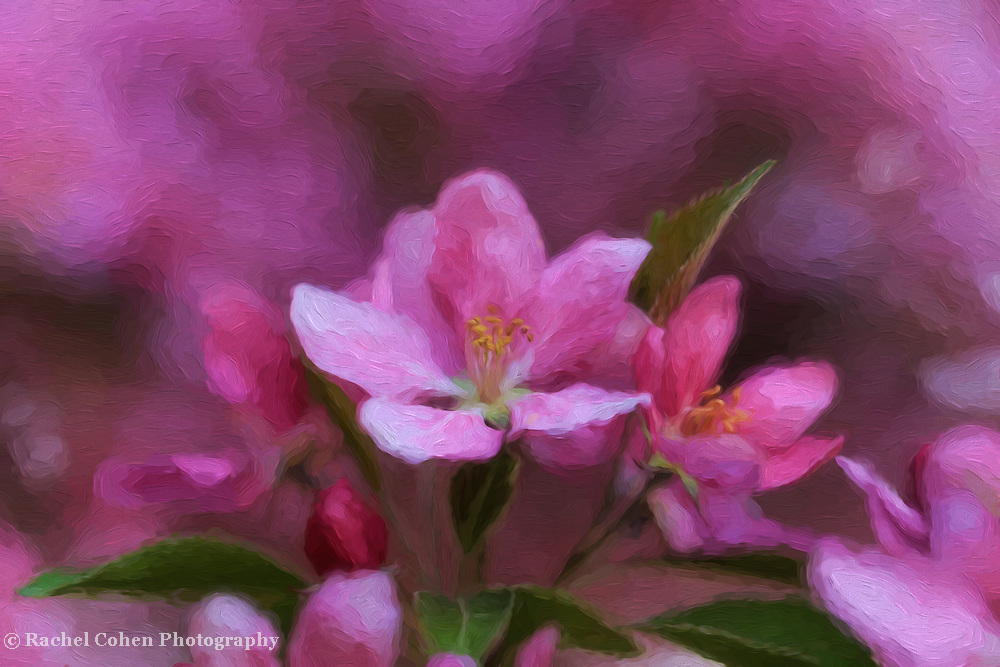 &quot;Pink Floral Oil Painting&quot;<br />