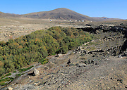 Vegetation growing in bottom of seasonal watercourse valley, near Paraja, Fuerteventura, Canary Islands, Spain