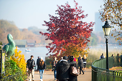 © Licensed to London News Pictures. 01/11/2015. London, UK. A couple walk past a tree displaying a full rage of autumn colours, from green through to deep red, in Hyde Park, Central London.  Photo credit: Ben Cawthra/LNP