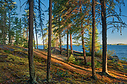 Boreal forest at edge of Setting Lake at sunrise<br />