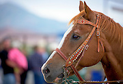 Focused shot of horses' head with reins on.
