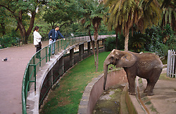 Visitors at zoo standing outside elephant enclosure looking at elephant,