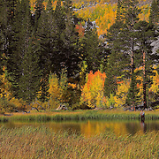 Weir Lake -  Fall Color