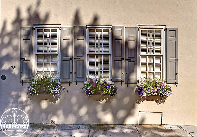 Charleston Tradd Street #78 window boxes.