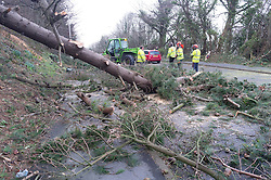 """© Licensed to London News Pictures. 12/02/2014. Aberystwyth, UK. The main road out of Aberystwyth to the south was blocked when a tree fell on a small car. No injuries were reported Winds gusting up to 107mph are battering the west wales coast at Aberystwyth.  Met Office """"red warnings"""",  the first of the winter , indicating risk to life and severe structural damage have been issued.. Photo credit : Keith Morris/LNP"""