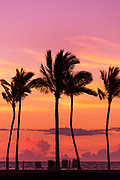 Sunset through silhouetted palms at Anaeho'omalu Bay, Kohala Coast, The Big Island, Hawaii USA