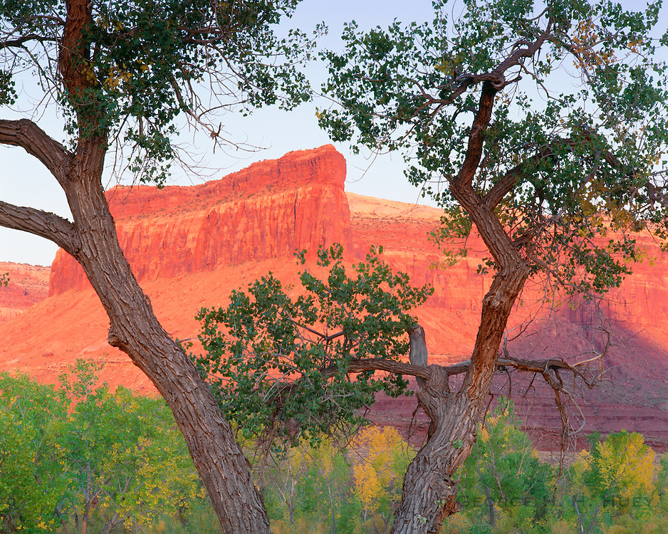 0352-1005 ~ Copyright: George H. H. Huey ~ Sunset in Indian Creek Canyon with cottonwood trees. BLM. Southeastern Utah.