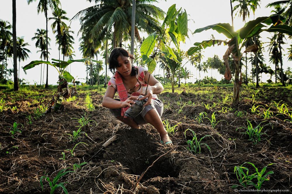 Die Bauern erhielten von TFM Kakaosetzlinge. Gemeinsam kann die Genossenschaft den Kakao vermarkten.