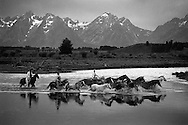 Cowboys moving horses across Buffalo Fork Creek,, Diamond Cross Ranch, Jackson Hole Wyoming, Moran, Grand Teton National Park