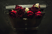 Pretty Roses are seen in the garbage in Manhattan, NY.