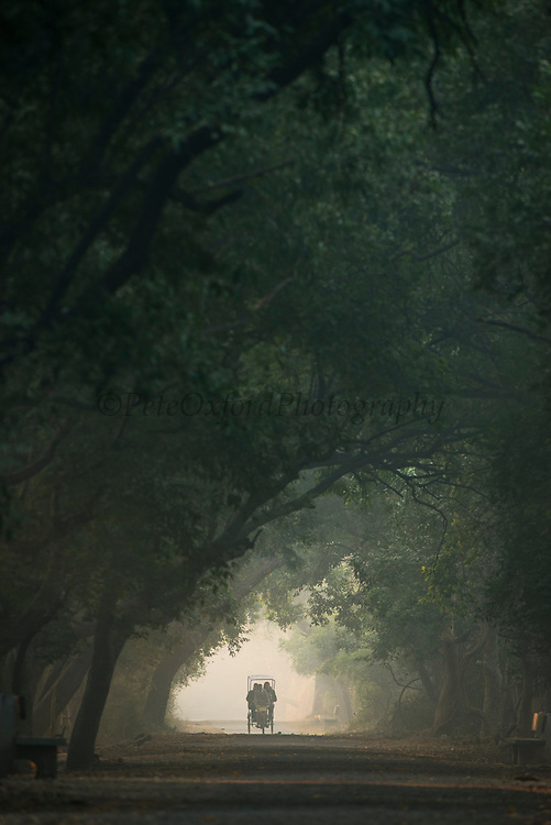 Rickshaw at dawn<br /> Bharatpur National Park <br /> Rajasthan, India