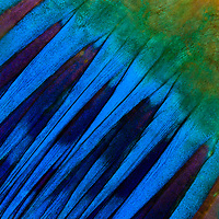 Parrofish tail detail, Marsa Shagra, Egypt, Red Sea. Texture - On this set Magnus idea was to refabricate a feeling of texture, fabric or textile through supermacro images of underwater living animals. On a macro perspective life in the oceans is so amazing.