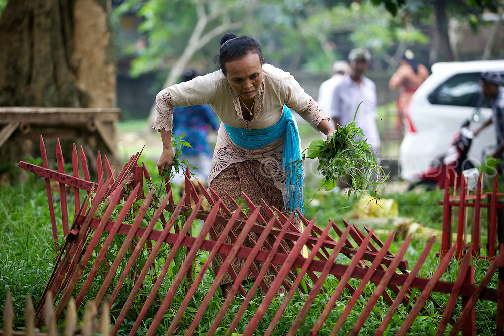 A woman weeding around a grave.<br />