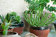 A collection of succulent plants displayed in an urban garden on a balcony