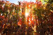 Fall color. Ranchos de Taos, New Mexico.
