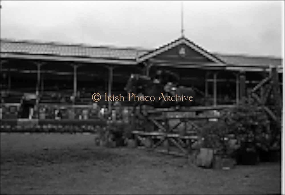 "09/08/1962<br /> 08/09/1962<br /> 09 August 1961<br /> RDS Horse Show, Ballsbridge Dublin, Thursday. <br /> Picture shows ""Kilcurry"", owned by Mr James B. McNicholl."