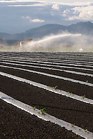 Irrigating crops in the Skagit Valley Washington USA