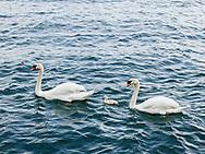 https://Duncan.co/three-swans