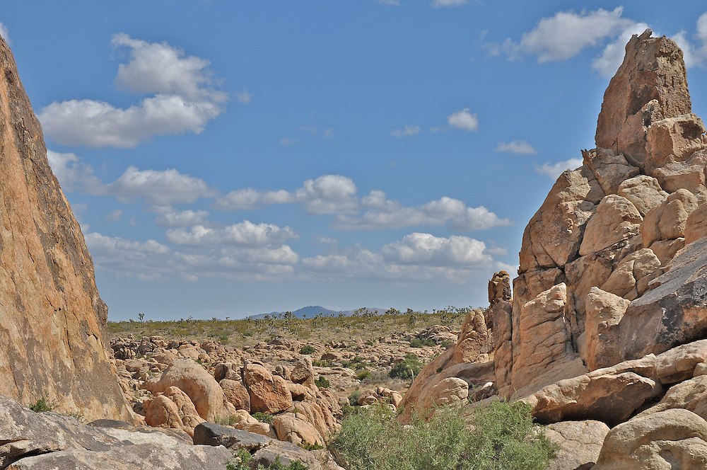 High Noon Landscape at Joshua Tree National Park