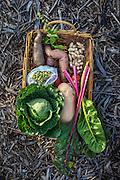Some of the food grown in a garden run by Jeanette Bell and Erin Zimmer on a formerly blighted plot in the Lower 9th Ward of New Orleans. They were harvested on Thursday, December 17, 2016. (Photo by Chris Granger, Nola.com | The Times-Picayune)