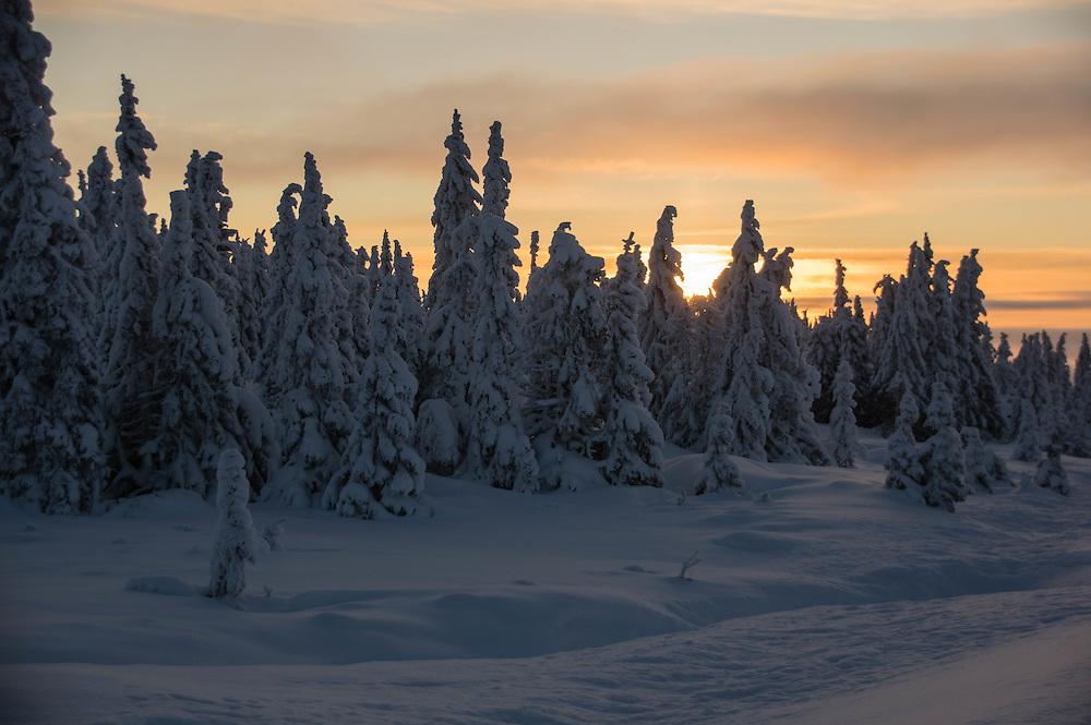 Winterlandscape