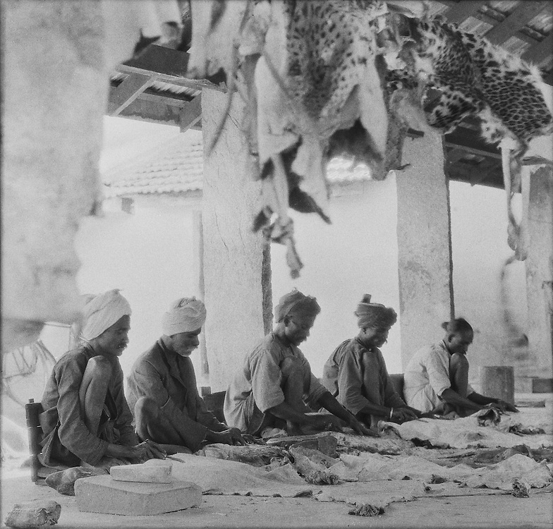 The Drying Shed, Van Ingen's Taxidermist Firm, Mysore, India, 1929