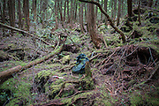 A bag and a sheet of pills lie on the ground in Aokigahara Jukai, better known as the Mt. Fuji suicide forest.