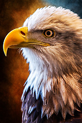 Bald Eagle Head-shot Closeup