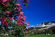 LILACS BLOOM ON THE LAWN BELOW FORT MACKINAC ON MACKINAC ISLAND, MICHIGAN.