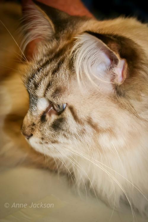 Sydney Uni Cat show Kittens