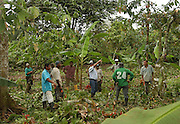 Isla Grande de Rio Rosario.<br /> A man from the cocoa federation (centre) instructs former coca farmers how to clear undergrowth and prune cocoa trees. This is part of an alternative development program for former coca farmers. This agro-forestry program, has farmers plant cocoa instead of coca, and harvest wood in a sustainable way. The women of the village are taught to make jewelery and household utensils out of coconut shells to be sold at craft shops and fairs. This project is USAID funded and implemented by the UN and FAO (Food and Agriculture Organization). This area is under the control of leftist guerillas (FARC).