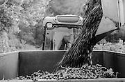 Vignoble du Mas de Cadenet, Trets