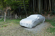 car parked under cover at edge of a bamboo forest