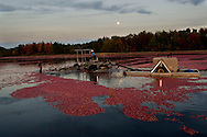 Kevin Ritter, 38 (Red shirt) and Herb Armstrong, 56, working at Lee Brothers, Inc. (The Lee Brothers Farm) harvesting cranberries in Chatsworth, NJ, known locally as the capital of the Pinelands region..October 13 -14, 2008  ..The harvesting pool lighting by the moon...