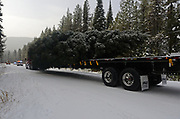 The 2017 Capitol Christmas tree carried by Whitewood Transport truck starts its journey down the Yaak River Road after leaving the Historic Upper Ford Ranger Station where the Engelman spruce was located in the upper Yaak Valley, northwest Montana.