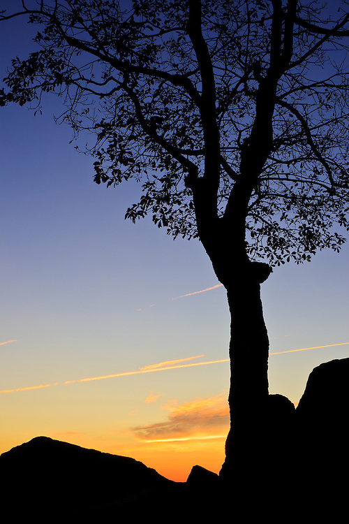 An autumn tree and rock formations are silhoutted against the morning twilight, Hazel Mountain Overlook, Shenandoah National Park, Virginia.
