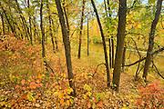Autumn colors in Seine River Forest.<br /> Winnipeg<br /> Manitoba<br /> Canada