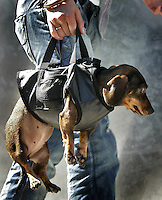 10-07-2005 AMSTERDAM;In het Openluchttheater van het Amsterdamse Vondelpark is zondag een hondenmodeshow gehouden