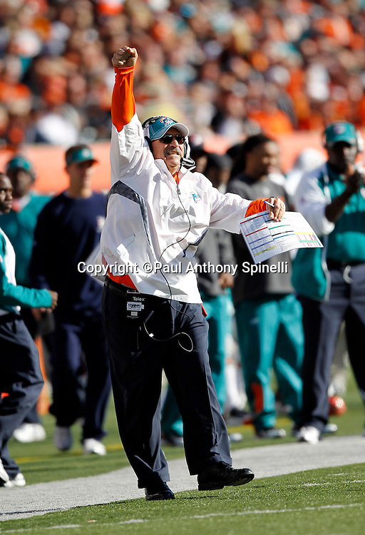Miami Dolphins Head Coach Tony Sparano yells and cheers for his team after they score a fourth quarter touchdown that gives the Dolphins a 22-14 lead during the NFL week 8 football game against the Cincinnati Bengals on Sunday, October 31, 2010 in Cincinnati, Ohio. The Dolphins won the game 22-14. (©Paul Anthony Spinelli)