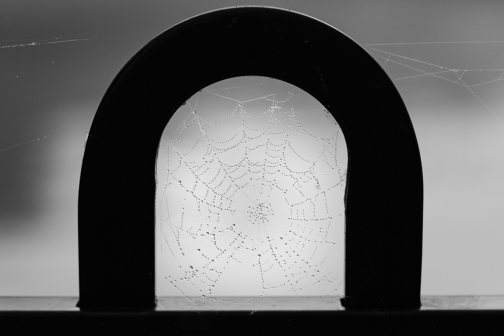 https://Duncan.co/spider-web-on-fence-with-dew