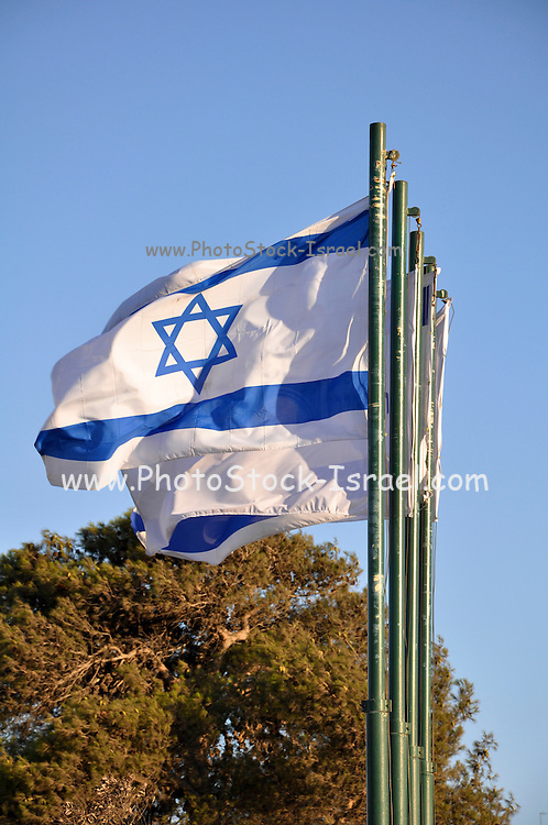A row of Israeli blue and white flags blowing in the breeze