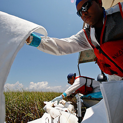BP contract workers uses absorbent pads on grass impacted by oil in the marshlands outside of Cocodrie, Louisiana, U.S., on Tuesday, June 1, 2010. The BP Plc Deepwater Horizon drilling rig that exploded and collapsed into the Gulf of Mexico continues to release thousands of barrels of oil into the gulf as cleanup and containment efforts continue all along the gulf coast. Natural wildlife habitats, marine life and the area seafood industry is threatened by oil that is now reaching coastal areas throughout Louisiana. Photographer: Derick E. Hingle