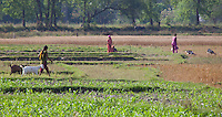 People and animals on farmland, Bardiya, Nepal