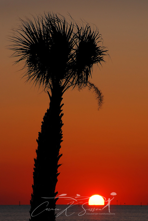 A palm tree is silhouetted as the sun sets over the water in Pass Christian, Mississippi Dec. 8, 2010. The Gulf Coast continues to recover from this summer's Deepwater Horizon BP oil spill, which affected nearly 29,000 square miles of shoreline from Louisiana to Florida. (Photo by Carmen K. Sisson/Cloudybright)