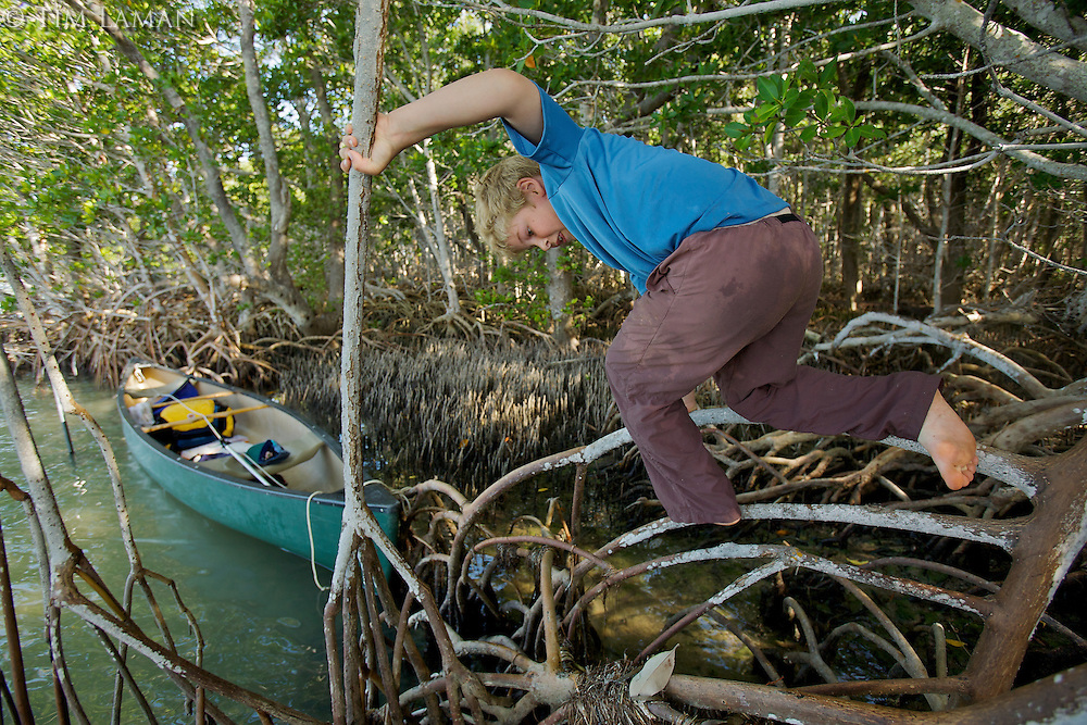A boy (age 7) climbing on mangrove roots.  Bradley Key, Florida Bay, Everglades National Park..Florida, USA.