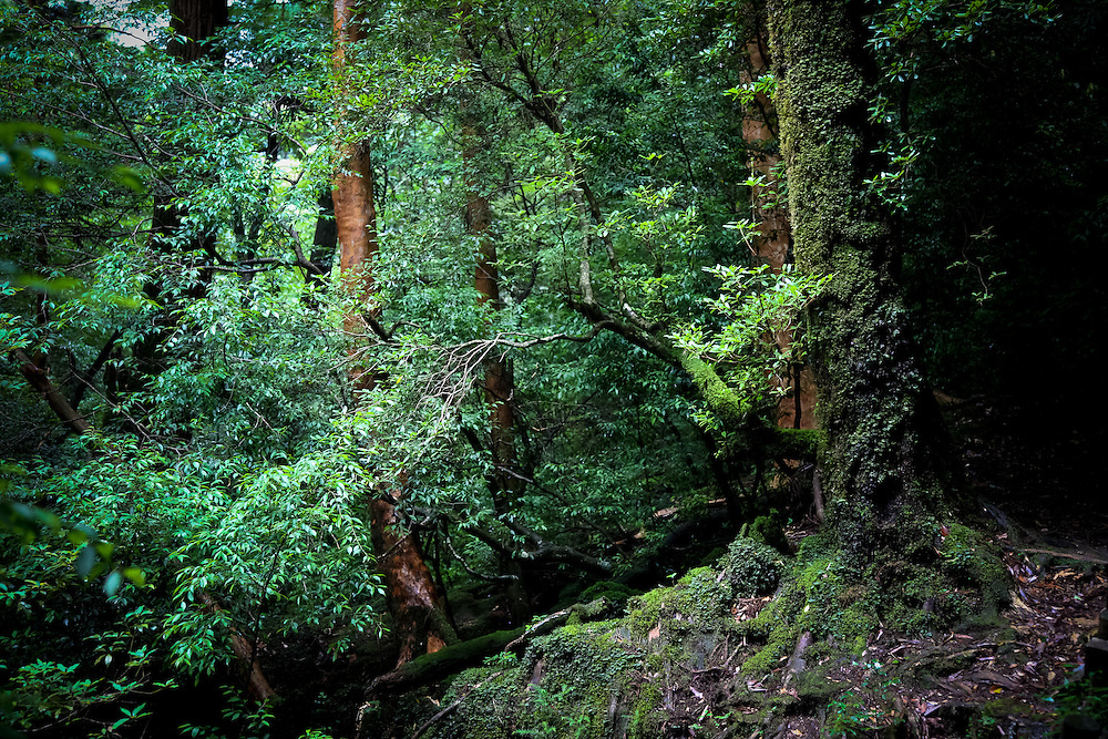 Japan, Yakushima - red trees and green nature