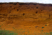 A08BRB Biotic weathering caused in sandy cliff by nesting sand martins Dunwich Suffolk England
