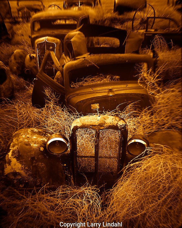 Old cars in sea of tumbleweed Wenden AZ